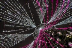 Julgran från botten upp i Vilnius royaltyfria bilder