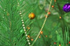 Julgran grön bakgrund royaltyfria bilder