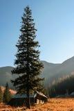 Julgran i bergen Arkivbild