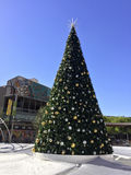 Julgran i i stadens centrum Phoenix, AZ Royaltyfri Bild