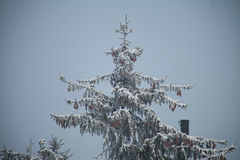 Julgran i skog Arkivfoto