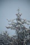 Julgran i skog Royaltyfria Foton