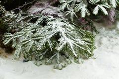 Julgran i snö på gatan filialen Royaltyfria Bilder