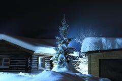 Julgran i snöig vinter Royaltyfri Bild