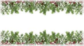 Julgran i snön, kottar, röda bär isolering celeb Arkivfoton