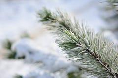 Julgran i snow Royaltyfri Fotografi