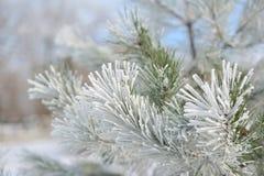 Julgran i snow royaltyfri bild