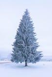 Julgran i snow Royaltyfri Foto