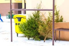 Julgran kasserad i avfallet Arkivfoton