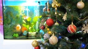 Julgran med bollar, garneringar och en girland framme av akvariet inom rummet lager videofilmer