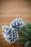 Julgran med kottar Fotografering för Bildbyråer