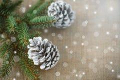 Julgran med kottar Arkivbild