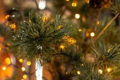 Julgran med kottar på en stadsgata exponerad med en girland och som annonserar ljus royaltyfri bild