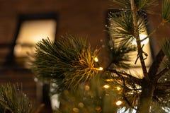 Julgran med kottar på en stadsgata exponerad med en girland och som annonserar ljus arkivfoton