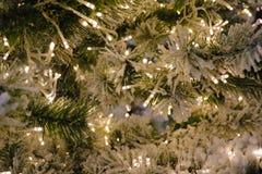Julgran med kottar på en stadsgata exponerad med en girland och som annonserar ljus En filial av granen med regndroppar, royaltyfria bilder