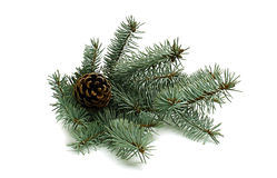 Julgran med pinecone Royaltyfri Foto