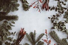Julgran och dekorativa växtsidor royaltyfri bild