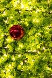 Julgran och julbollar Fotografering för Bildbyråer