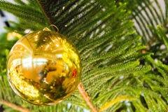 Julgran och julbollar Royaltyfria Bilder