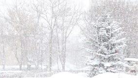 Julgran- och snönedgång stock video