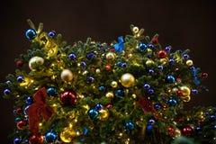 Julgran på en svart bakgrund royaltyfri fotografi