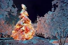 Julgran på natten Royaltyfri Fotografi