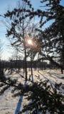 Julgran på snön och i filialerna solen arkivbilder