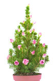 Julgran som dekoreras med rosebuds Fotografering för Bildbyråer