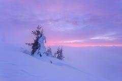 Julgranar i bergen med snö Arkivfoto