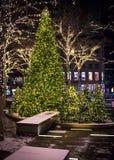 Julgranar på natten arkivbilder