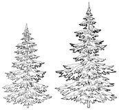 Julgranar under snö, konturer Royaltyfri Fotografi