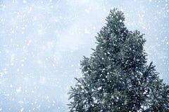 Julgranen sörjer eller gran med snöfall på himmelbakgrund i vinter Arkivfoton