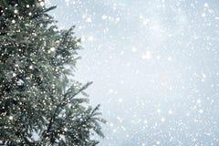 Julgranen sörjer eller gran med snöfall på himmelbakgrund i vinter Royaltyfria Bilder