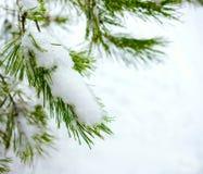 Julgranfilial i vinterskog Royaltyfri Fotografi