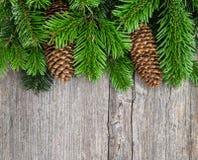 Julgranfilialer med sörjer kottar Arkivfoton