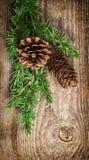 Julgranfilialer med sörjer kottar Fotografering för Bildbyråer