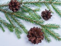 Julgranfilialer med sörjer kottar, på träbakgrund arkivfoton