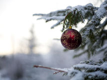 Julgrangarnering - röd boll med guld- snöflingor Royaltyfria Foton