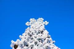 Julgrangran och stor snöflinga på blå himmel royaltyfri foto
