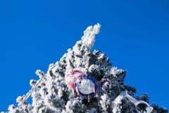Julgrangran på blå himmel royaltyfria bilder