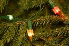 Julgranljus på granträdfilialer Arkivbild