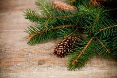 Julgrantree med pinecones Arkivbild