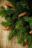 Julgrantree med pinecones Arkivfoton
