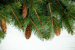 Julgrantree med pinecones Arkivbilder