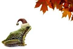 julgrodan låter vara lönn den röda sittande treen Arkivfoto