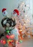 Julhund med julgranen royaltyfria bilder