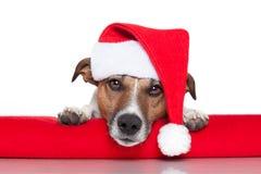 Julhunden santa behandla som ett barn Arkivbilder
