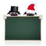 Julhundkapplöpning som Santa Claus Arkivfoton