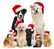 Julhusdjur med santa hattar arkivbild