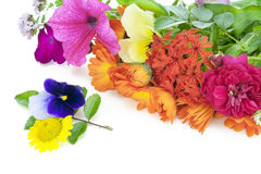Juli-Blumen Lizenzfreie Stockfotografie